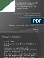 Seminário BMPD-Cynodon Dactylon 97-2003