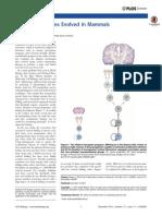 Weaver J. 2014. How folded brains evolved in mammals.pdf