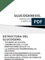 GLUCOGENESIS (1)