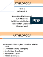 Ppt Arthropoda Fix