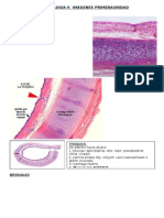 Histologã-A II Imã-genes Primera Unidad Xxx