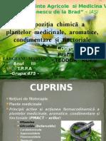 Proiect PLANTE MACT.pptx
