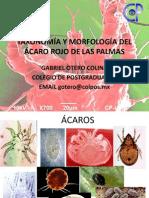 Taxonomía y Morfología Del Ácaro Rojo de Las Palmas