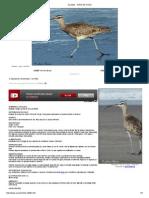 Zarapito - Aves de Chile