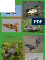bird id ppt 31 40 only