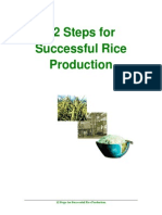 12 steps for successful rice production