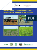 guidelines-for-dry-seeded-rice-dsr-in-the-eastern-gangetic-plains-of-india