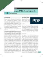 Physiology of Spermatogenesis