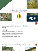 Padurile Din Romania - Rasinoase