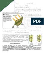 Guía de Estudio Fotosintesis