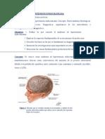 sindrome_hipertension_endocraneana