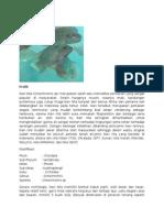Komoditi Ikan Nila