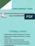 clase 4 - Cartilago y hueso.ppt