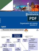 Clase 4 Organización Del Sistema Nervioso II 2014