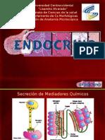 Endocrino Dra Bravo