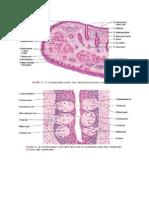 Gambar Histologi