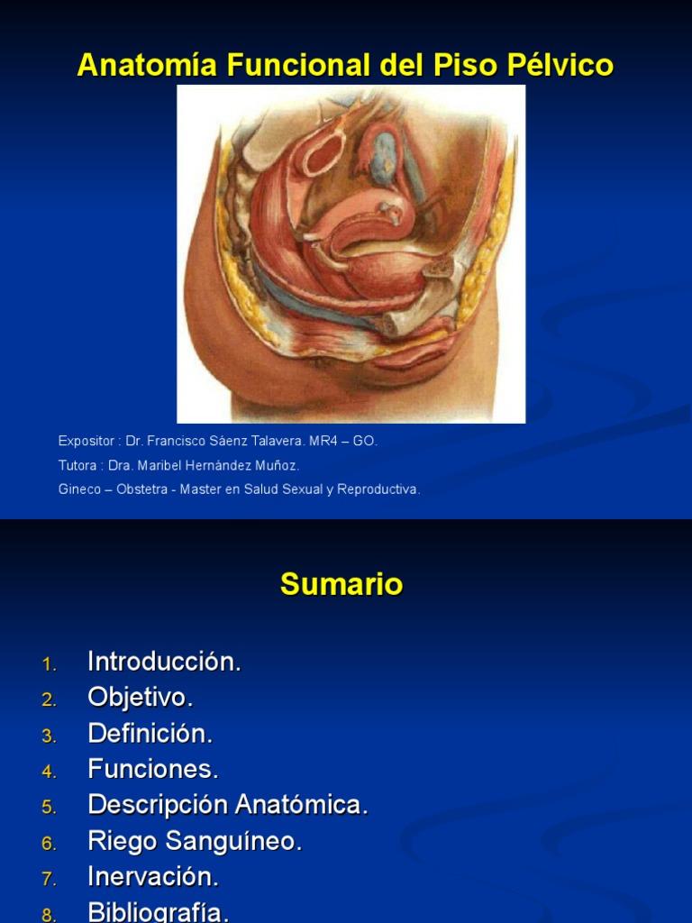 Anatomia FuncionaPiso pelvicol Del Piso Pelvico Copia
