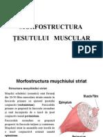 Structura Tesutului Muscular