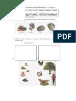 Guías 1° básico ciencias