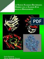 """Caracterización de Nuevas Xilanasas Bacterianas. Ingenieria de Enzimas con la Xilanasa XynB de """"Paenibacillus barcinonensis"""""""