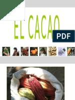 Cacao Basico