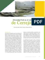 Jaramillo C Et Al 2014 Diversidad Fosil Valle Del Cerrejon