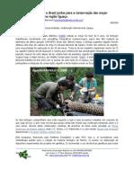 Argentina and Brazil for the sake of the jaguars in the Iguaçu region (Portuguese)