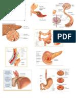 Gastro intestinal pictures
