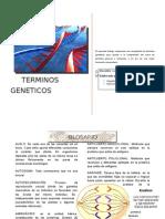 TÉRMINOS-GENÉTICOS