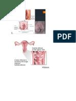 ginekologi.docx