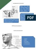 Anatomia de Los Ganglios