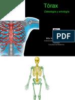 Torax Osteologia Artrologia