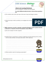 The Brain and Learning Worksheet