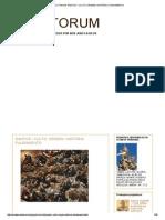 Sanctorum_ Santos - Culto, Origem, História, Fundamento