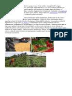 Agricultura, Agroindustria Capital Sacatepequez