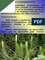 Licopodiophyta 2