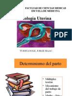 fisiologia utero