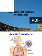 Anatomia Sistema Respiratorio