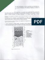 Piel - Fisiología