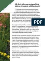 Wildflower Booklet RomanianA5