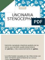 UNCINARIA-STENOCEPHALA