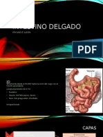 Intestino Delgado.pptx