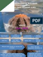 Biologi Reproduksi Bulu Babi