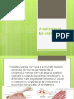 Analizatorul kinestezic