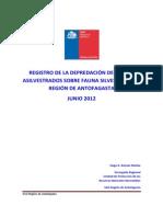 Registro de la Depredación de Perros Asilvestrados sobre Fauna Silvestre en la Región de Antofagasta - Junio 2012