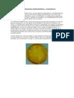 Bacterias Anaerobias y Heterótrofas