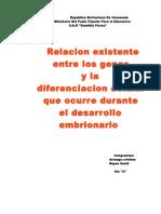 Relacion existente entre los genes y la diferenciacion celular que ocurre durante el desarrollo embrionario