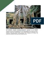 Estas Raices de Arboles Que Cubre La Casi Totalidad Del Edificio de Ankorg Crecen Extremadamente