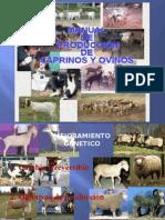 Manual de Produccion de Caprinos