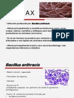 Antrax1
